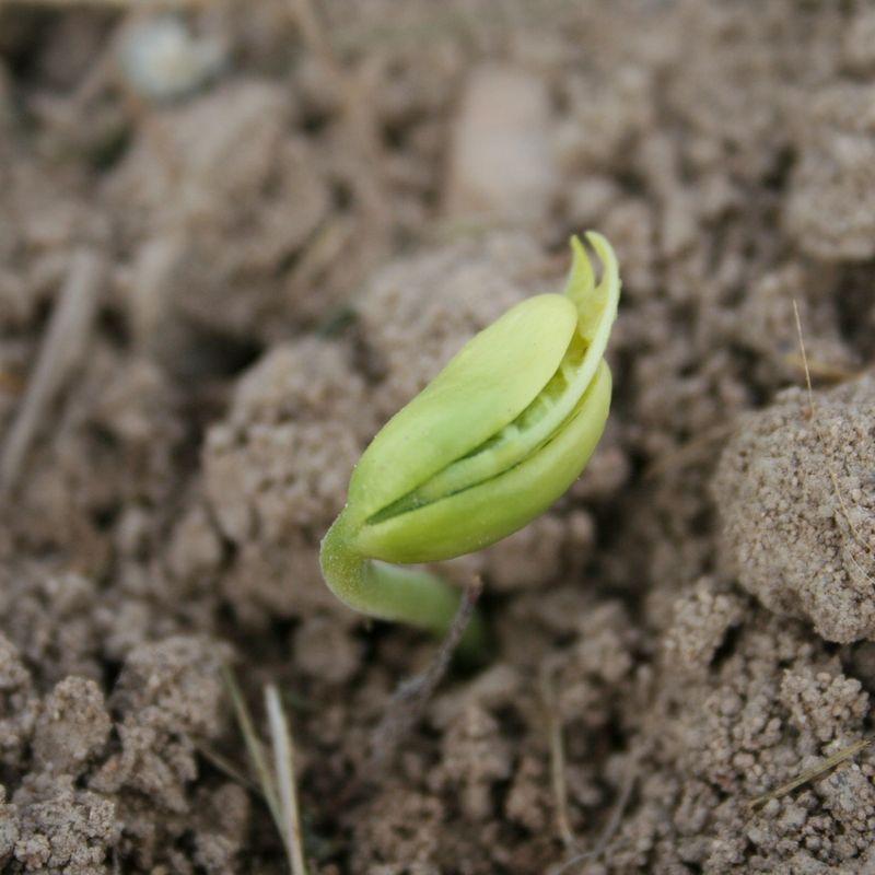 cutiver un potager en terre argileuse - ferme de sainte marthe
