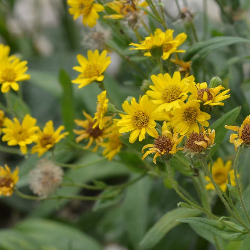 Cr er un jardin de m dicinales ferme de sainte marthe - Creer un jardin mediterraneen avignon ...