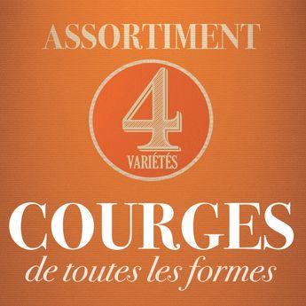 ASSORTIMENT DE COURGES : DE TOUTES LES FORMES
