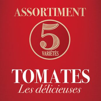 ASSORTIMENT LES DELICIEUSES TOMATES