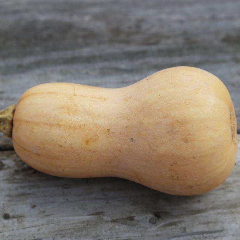 Courge musquee butternut ab ferme de sainte marthe - Comment cuisiner les butternuts ...