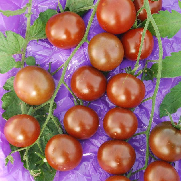 TOMATE CHINESE BLACK PEARL AB