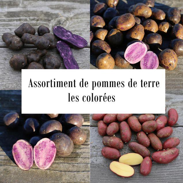 ASSORTIMENT DE POMMES DE TERRE COLOREES