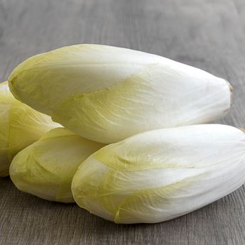 ENDIVE WITLOOF NORMALE NT