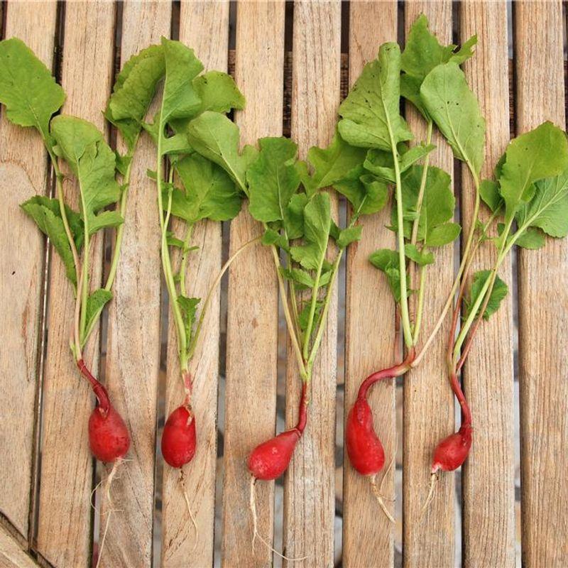 achat graine bio non hybride
